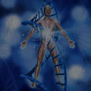 Fisiologia Energética Aplicada aos Canais Energéticos